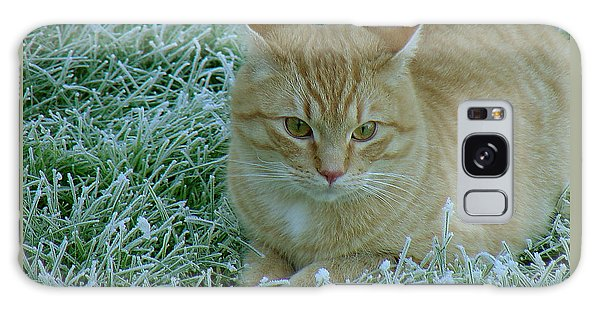 Cat In Frosty Grass Galaxy Case