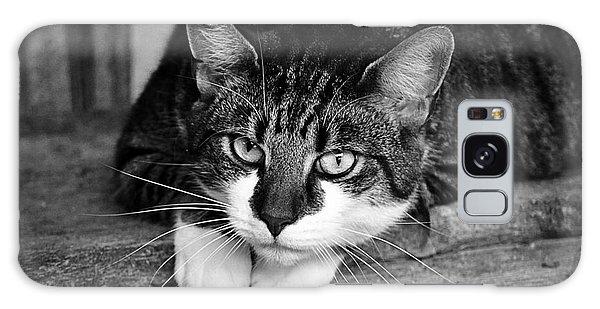 Cat Naps 2 Galaxy Case