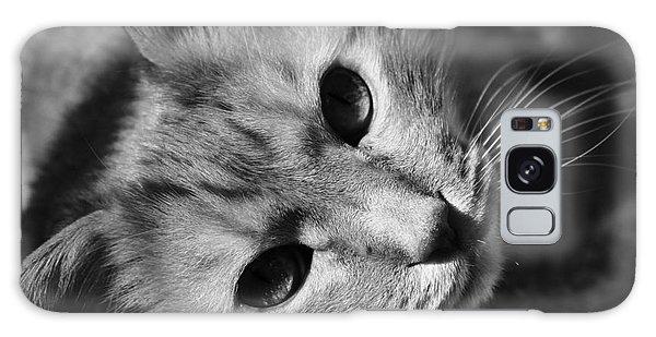Cat Naps Galaxy Case