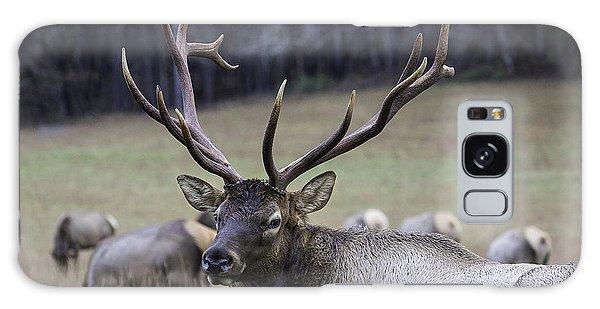 Cataloochee Elk Galaxy Case