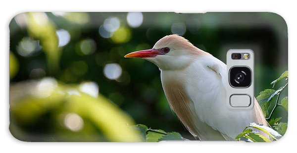 Cattle Egret In Oklahoma Galaxy Case