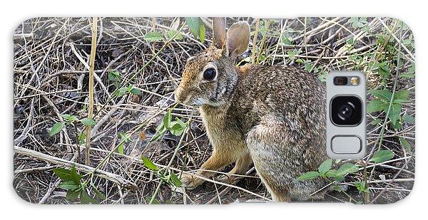 Cedar Hill Bunny Galaxy Case by Ricky Dean
