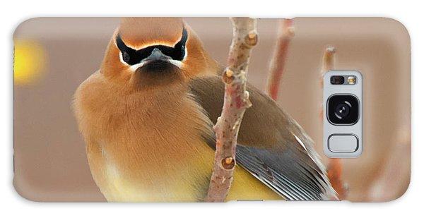Cedar Waxing Galaxy S8 Case - Cedar Wax Wing by Carl Shaw