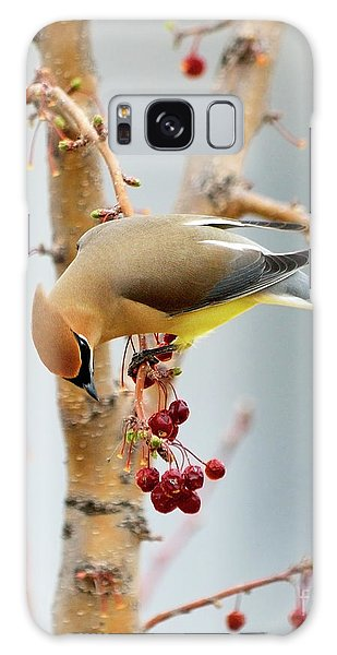 Cedar Waxwing 2 Galaxy Case