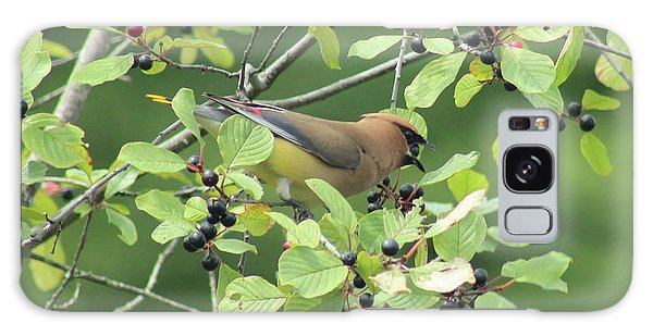 Cedar Waxwing Eating Berries Galaxy Case by Maili Page