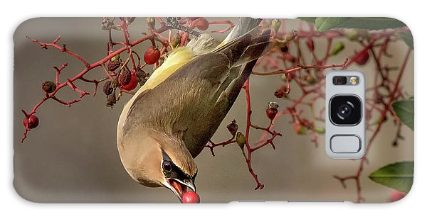 Cedar Waxwing With Toyon Berry Galaxy Case