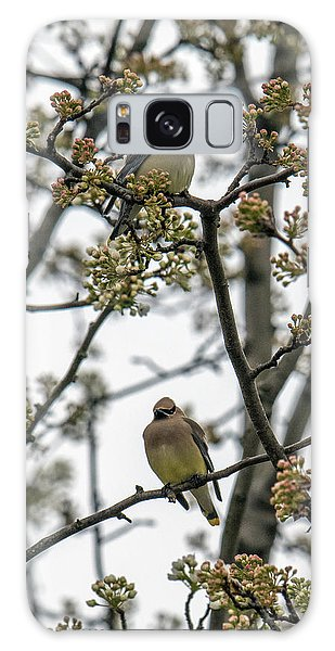 Cedar Waxwings In A Blossoming Tree Galaxy Case