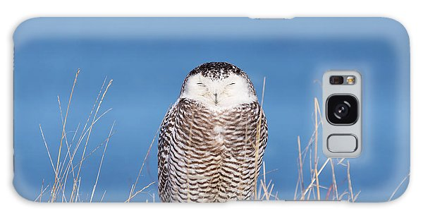 Centered Snowy Owl Galaxy Case