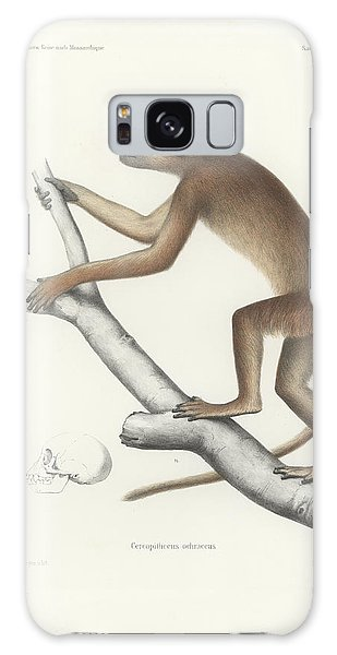 Central Yellow Baboon, Papio C. Cynocephalus Galaxy Case