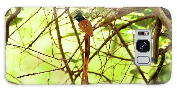 Ceylon Paradise Flycatcher Galaxy Case