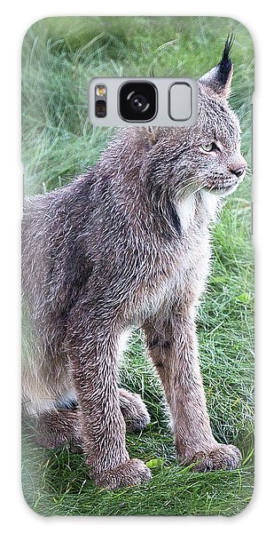 Champion Mama Lynx Galaxy Case
