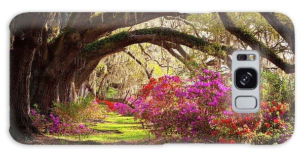 Charleston Sc Magnolia Plantation Gardens - Memory Lane Galaxy Case