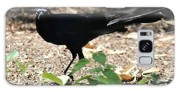 Galaxy Case - Charleston Wildlife. Black Bird by Lisa Marie Towne