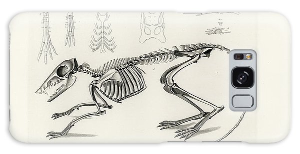 Checkered Elephant Shrew Skeleton Galaxy Case