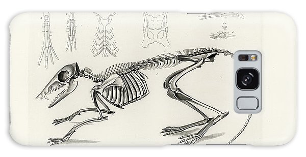Checkered Elephant Shrew Skeleton Galaxy Case