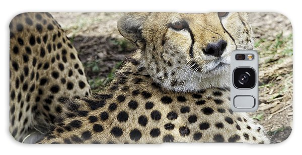 Cheetahs Resting Galaxy Case
