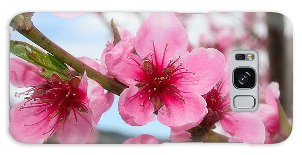 Oyama Galaxy Case - Cherry Blossoms by Tiffany Vest