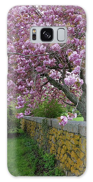 Cherry Tree, Cape Cod Galaxy Case