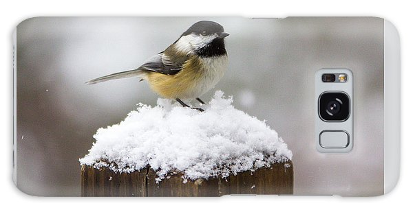 Chickadee In The Snow Galaxy Case