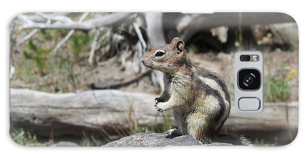 Chipmunk At Yellowstone Galaxy Case by Ausra Huntington nee Paulauskaite