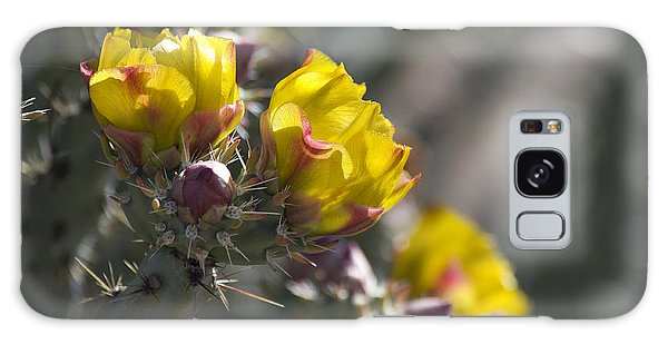Cholla Blooms Galaxy Case