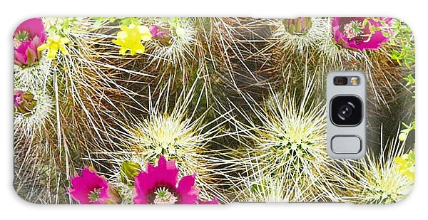 Cholla Cactus Blooms Galaxy Case