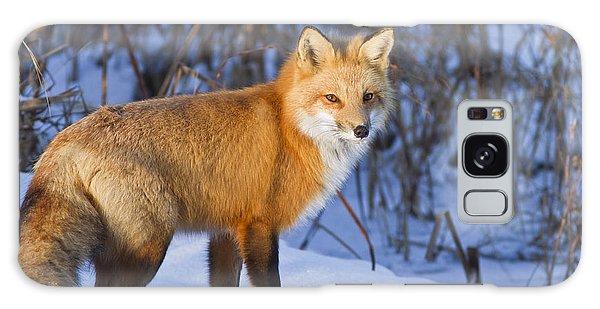 Christmas Fox Galaxy Case