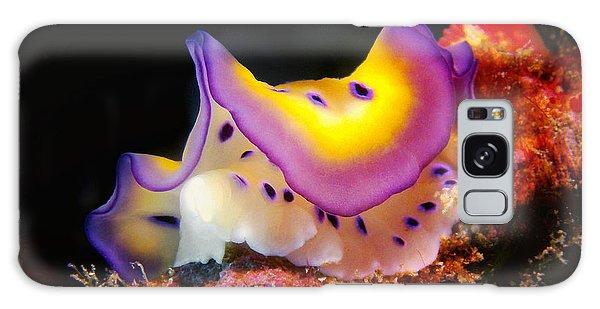 Chromodoris Kunei Nudibranch  Galaxy Case