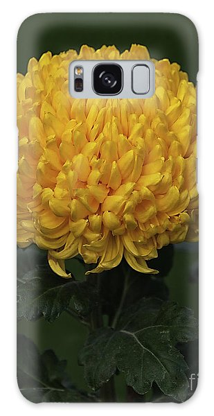 Chrysanthemum 'derek Bircumshaw' Galaxy Case