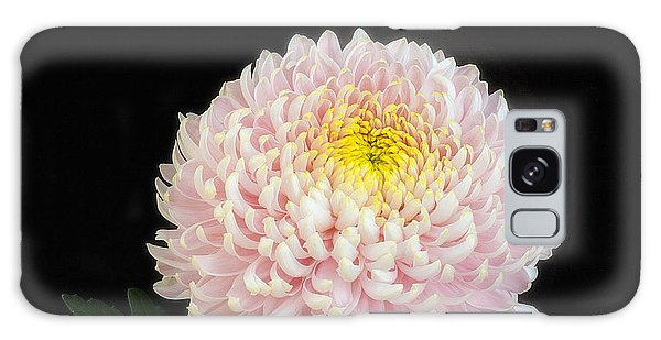 Chrysanthemum 'otome Pink' Galaxy Case