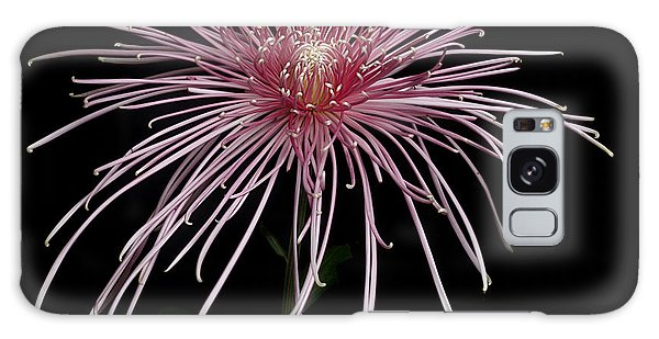 Chrysanthemum 'pink Splendor' Galaxy Case