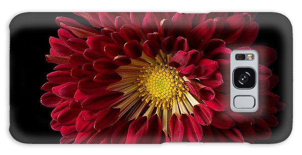 Chrysanthemum 'red Wing' Galaxy Case