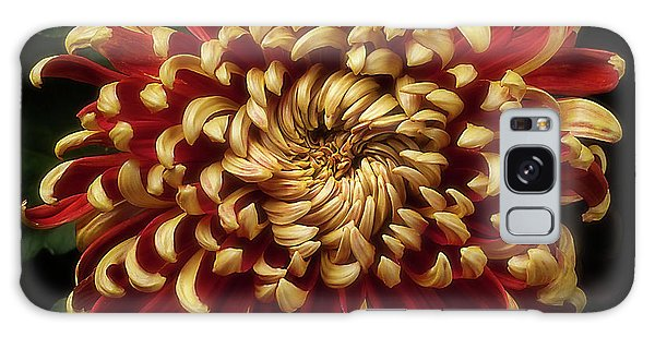 Chrysanthemum 'st Tropez' Galaxy Case