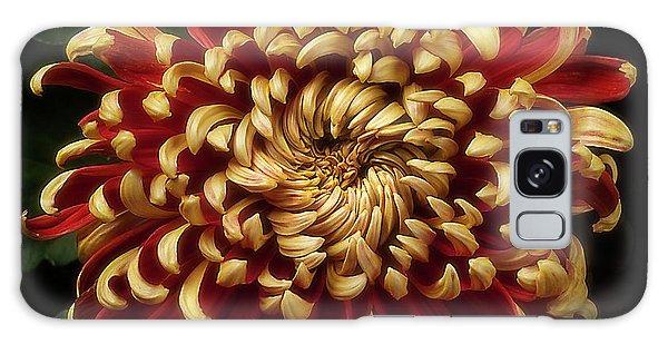 Chrysanthemum 'st Tropez' Galaxy Case