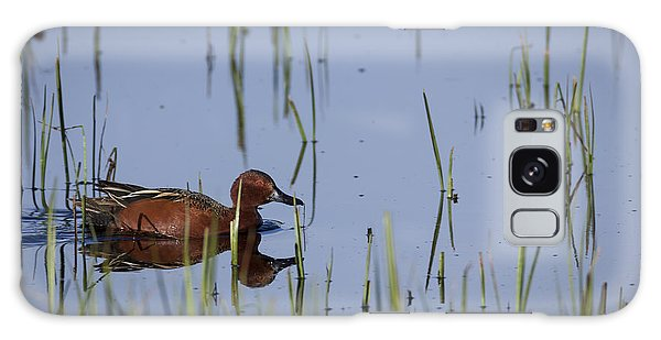Cinnamon Teal Adult Male Galaxy Case