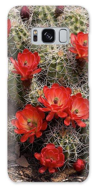 Claret Cup Cactus Galaxy Case