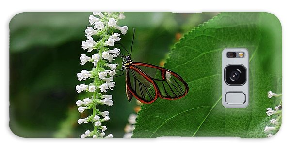 Clearwing Butterfly Galaxy Case by Ronda Ryan