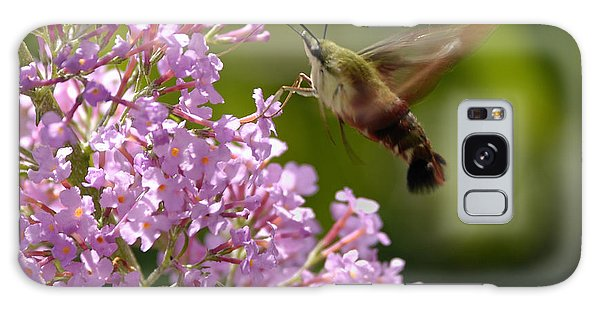Clearwing Pink Galaxy Case by Randy Bodkins