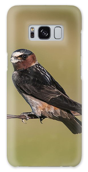 Cliff Swallow Galaxy Case