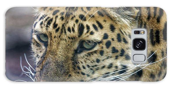 Close Up Of Leopard Galaxy Case