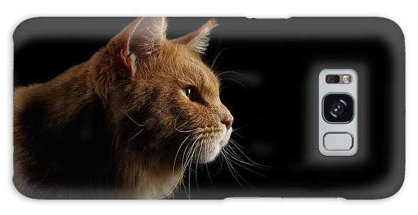 Cat Galaxy Case - Close-up Portrait Ginger Maine Coon Cat Isolated On Black Background by Sergey Taran