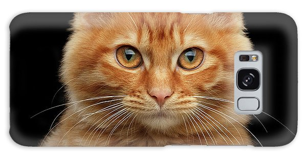 Close-up Portrait Of Ginger Kitty On Black Galaxy Case