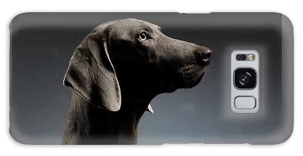 Dog Galaxy S8 Case - Close-up Portrait Weimaraner Dog In Profile View On White Gradient by Sergey Taran