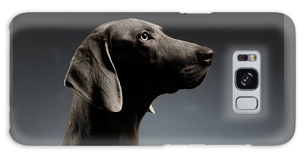 Dog Galaxy S8 Case - Close-up Portrait Weimaraner Dog In Profile View On White Gradient by Sergey Taran