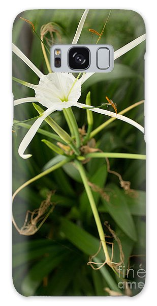 Close Up White Asian Flower With Leafy Background, Vertical View Galaxy Case