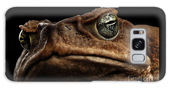 Closeup Cane Toad - Bufo Marinus, Giant Neotropical Or Marine Toad Isolated On Black Background Galaxy Case