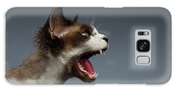 Cat Galaxy Case - Closeup Devon Rex Hisses In Profile View On Gray  by Sergey Taran