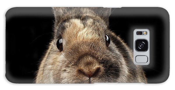 Closeup Funny Little Rabbit, Brown Fur, Isolated On Black Backgr Galaxy Case