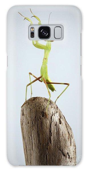 Closeup Green Praying Mantis On Stick Galaxy Case