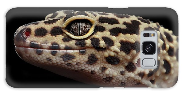 Closeup Head Of Leopard Gecko Eublepharis Macularius Isolated On Black Background Galaxy Case by Sergey Taran